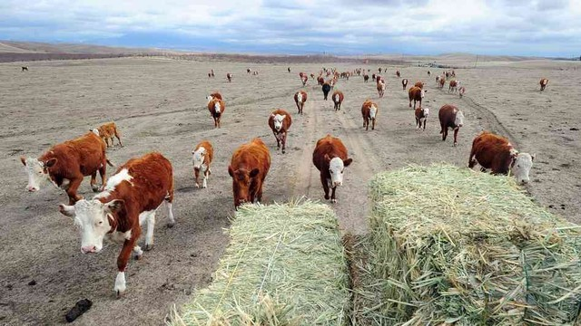 IRS Gives Farmers and Ranchers More Time to Replace Livestock Sold During Drought