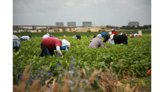 Immigration Debate: Farmers Say They Need Foreign-Born Workers