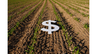 Farm Income Taxation: Reaping What Good Lobbying Has Sown