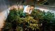 Eying taxation potential, U.S. lawmakers thinking about changing national pot laws